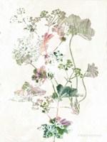 Boho Geranium Botanical Fine-Art Print