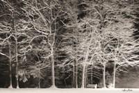 Snowy Trees Fine-Art Print