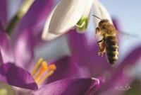 Bee I Fine-Art Print