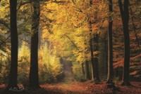 Autumn Mood Fine-Art Print