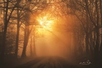 Misty Sunrise Fine-Art Print