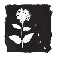 Nature by the Lake Flowers II Black Fine-Art Print