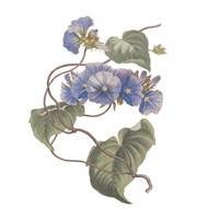 Monument Etching Tile Flowers I Framed Print