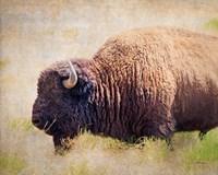 Buffalo II Fine-Art Print