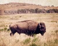 Buffalo I Fine-Art Print