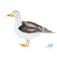 Seagull on White Fine-Art Print