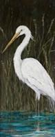 White Egret Fine-Art Print
