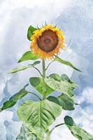 Summer Sunflower Fine-Art Print