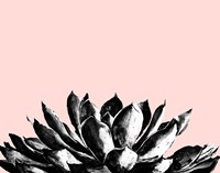 Agave on Blush Fine-Art Print