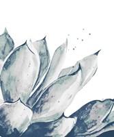 Blue Agave on White II Fine-Art Print