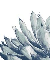 Blue Agave on White I Fine-Art Print