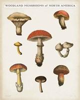 Mushroom Chart II Light Fine-Art Print