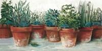 Pots of Herbs II White Fine-Art Print