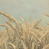 Gold Harvest Crop Fine-Art Print