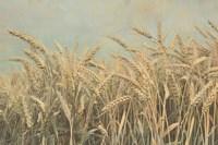 Gold Harvest Panel Fine-Art Print