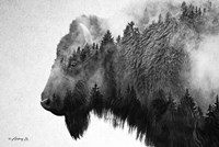 Black & White Bison Fine-Art Print