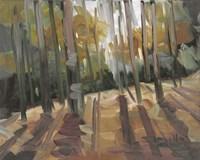 Backlit Woods Fine-Art Print