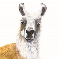 Alpaca Fine-Art Print