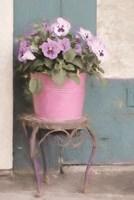 Pansy Bucket Fine-Art Print