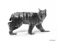 Black & White Bobcat Fine-Art Print