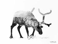 Black & White Reindeer Fine-Art Print