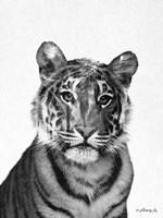 Black & White Tiger Fine-Art Print