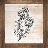 Petals on Planks - Thyme Fine-Art Print