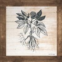 Petals on Planks - Ginseng Fine-Art Print