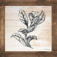 Petals on Planks - Bay Leaf Fine-Art Print