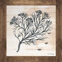 Petals on Planks - Cumin Fine-Art Print