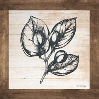 Petals on Planks - Capers Fine-Art Print