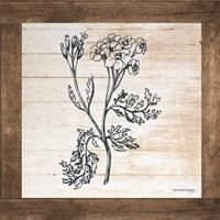 Petals on Planks - Achilles Fine-Art Print