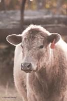 Portrait of a Cow Fine-Art Print