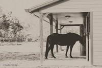 Horse at Home Fine-Art Print