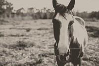 Friendly Horse Fine-Art Print