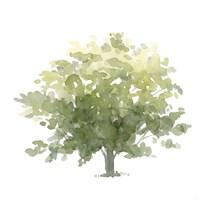 Lonely Oak I Fine-Art Print