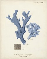 Antique Coral in Navy I Fine-Art Print