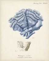 Antique Coral in Navy II Fine-Art Print