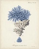 Antique Coral in Navy III Fine-Art Print