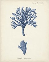 Antique Coral in Navy IV Fine-Art Print