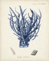 Antique Coral in Navy V Fine-Art Print