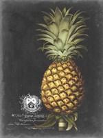 Royal Brookshaw Pineapple I Fine-Art Print