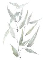Ethereal Eucalyptus I Fine-Art Print