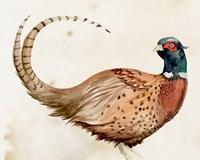 Pheasantry I Fine-Art Print