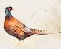 Pheasantry II Fine-Art Print