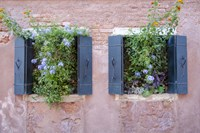 Italian Window Flowers II Fine-Art Print