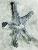 Aquatic I Fine-Art Print