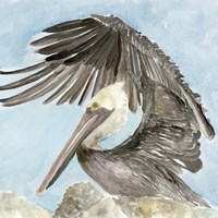 Soft Brown Pelican II Fine-Art Print