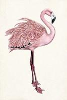 Striking Flamingo I Fine-Art Print
