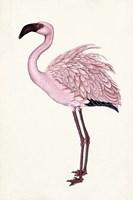 Striking Flamingo II Fine-Art Print